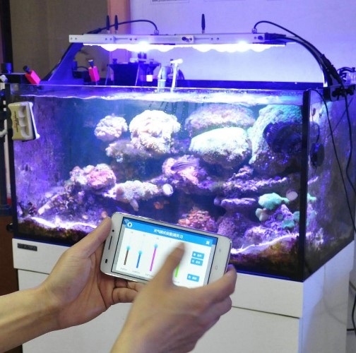 Sistem Pencahayaan Aquarium Air Laut