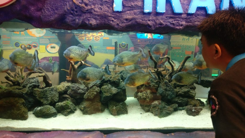 Aquascape Piranha Ocean World Trans Studio Bandung