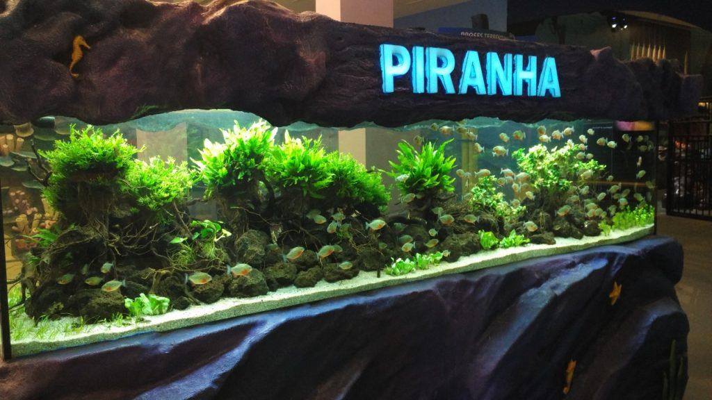Desain Aquascape Piranha