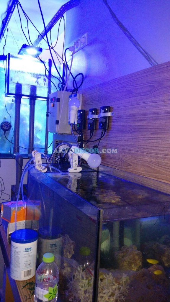 Cara Kontrol Sistem Aquarium Air Laut