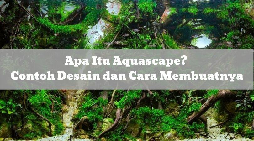 Apa Itu Aquascape Contoh Desain dan Cara Membuatnya