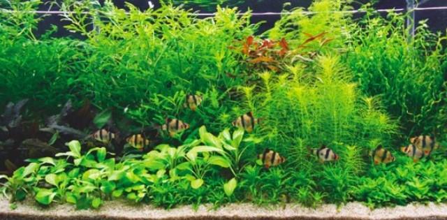 Aquascape Biotope Style 2