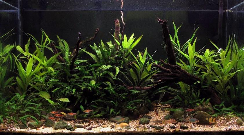 Aquascape Biotope Style