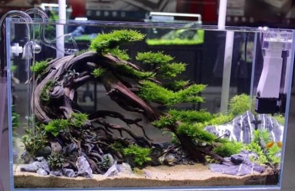 Aquascape Bonsai Style