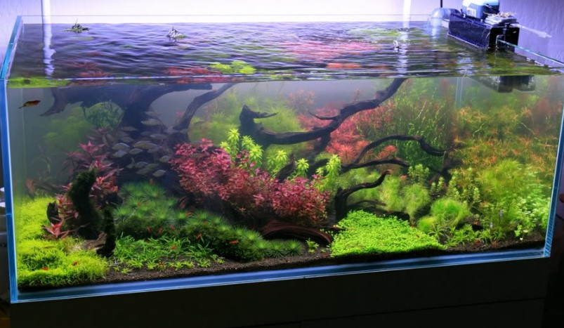 Contoh Aquascape Dutch Style
