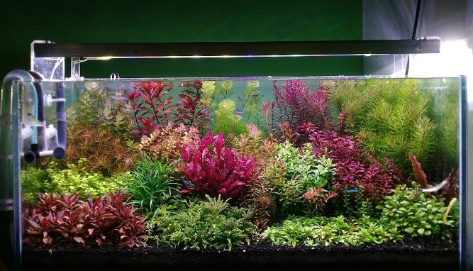 Model Aquascape Dutch Style