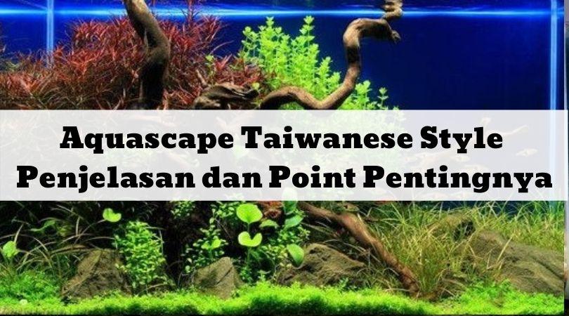 Aquascape Taiwanese Style Penjelasan dan Point Pentingnya