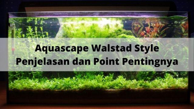 Aquascape Walstad Style Penjelasan dan Point Pentingnya