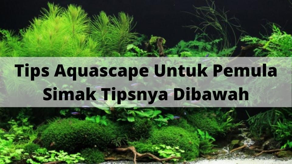 Tips Aquascape Untuk Pemula, Simak Tipsnya Dibawah