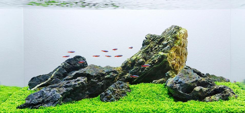 iwagumi style design aquascape 1