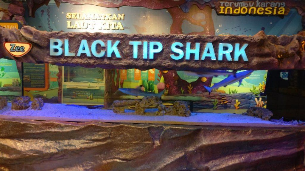 Aquarium Black Tip Shark Trans Studio Bandung