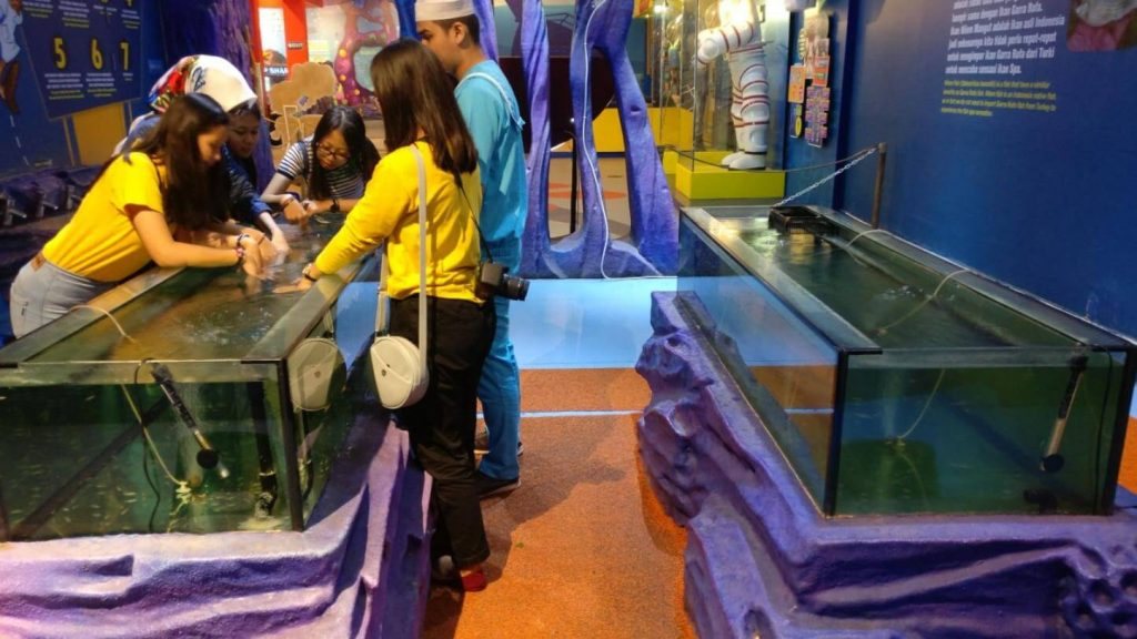 Aquarium Ikan Garra Rufa