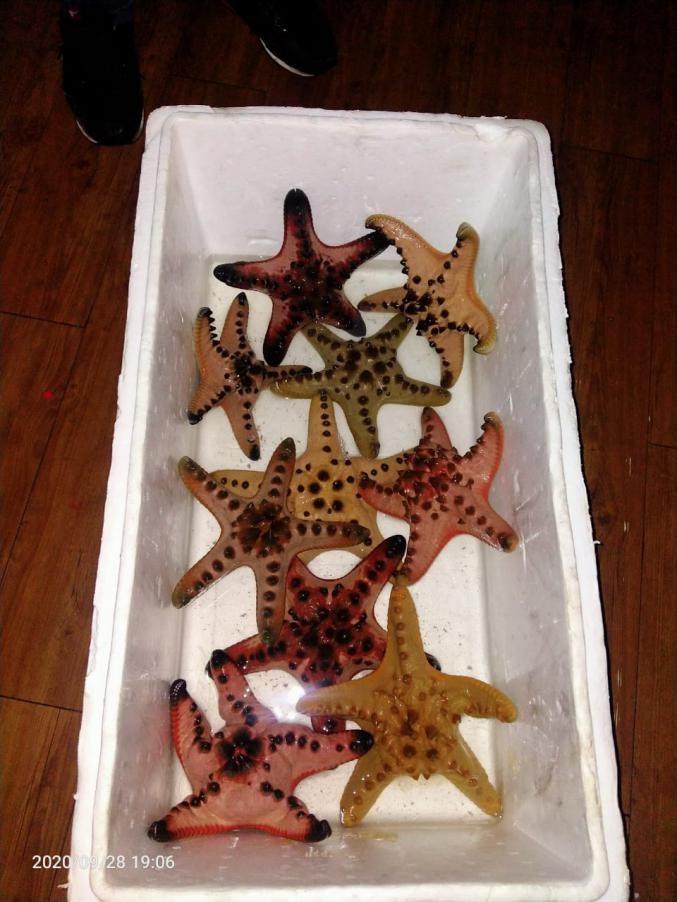 Bintang Laut Jenderal