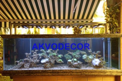 Dekorasi Aquarium Laut di Kelapa Gading