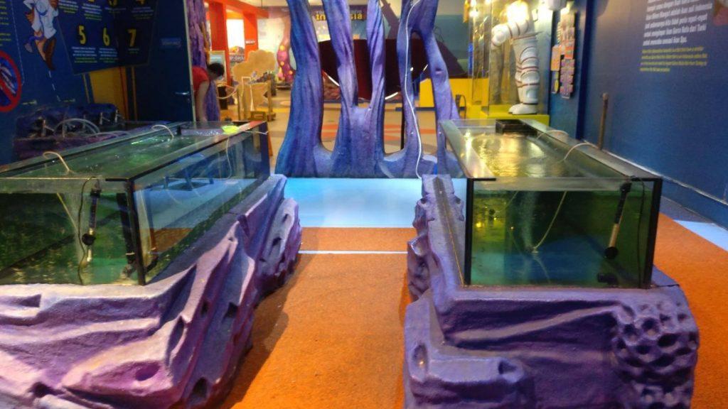 Desain Aquarium Ikan Garra Rufa