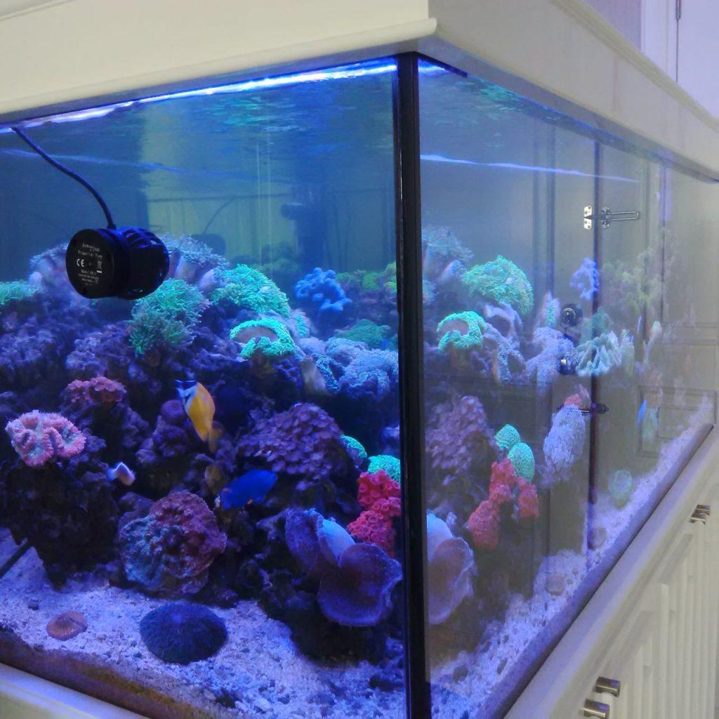 Desain Coral Tank Residensial