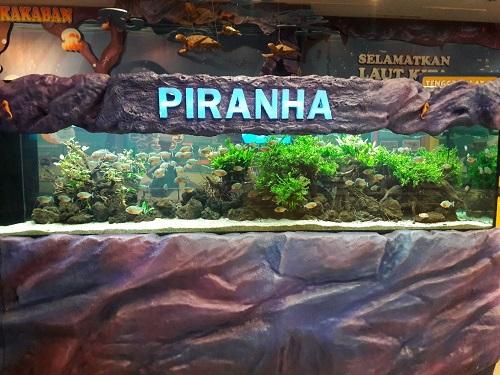 Mengenal Piranha Sang Predator Ganas dari Amazon