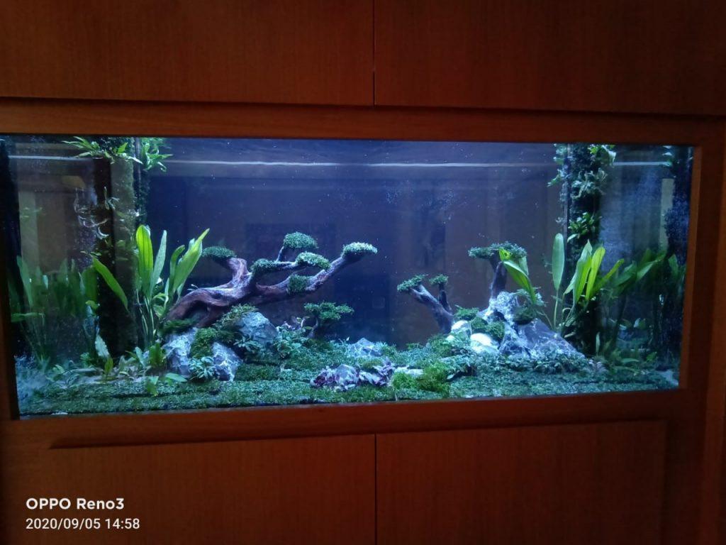 Pembuatan Aquascape Jungle Style