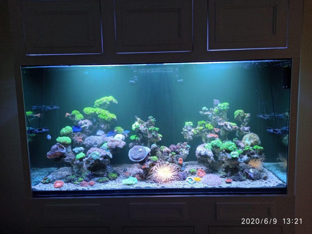 Projek Aquarium Air Laut bersama Jordi Onsu