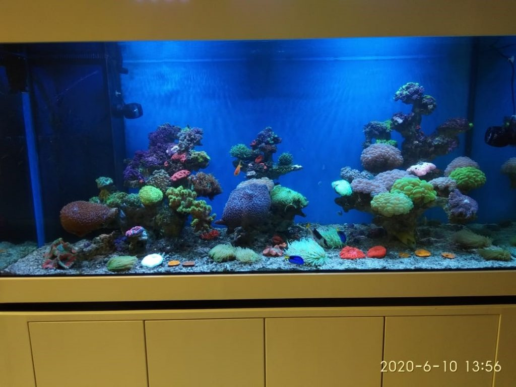 Projek Aquarium Air Laut di Ancol