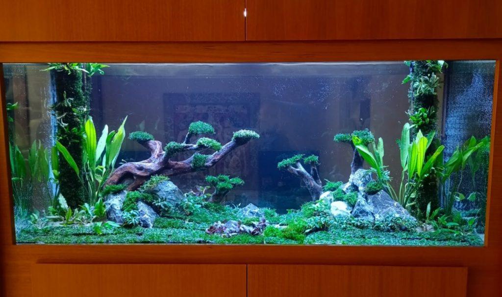 Projek Aquascape Jungle Style