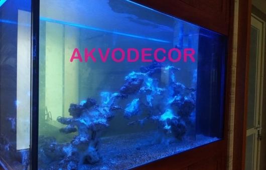 Proses Cycling Aquarium Laut Akvodecor di Goldfinch BSD