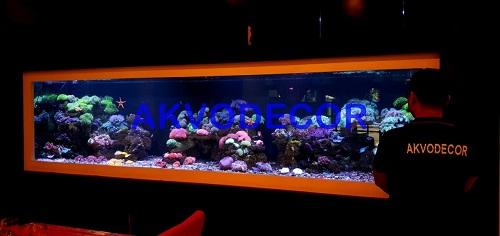 Projek Aquarium Air Laut di Menteng, Jakarta - Dekorasi Aquarium Air Laut Menteng