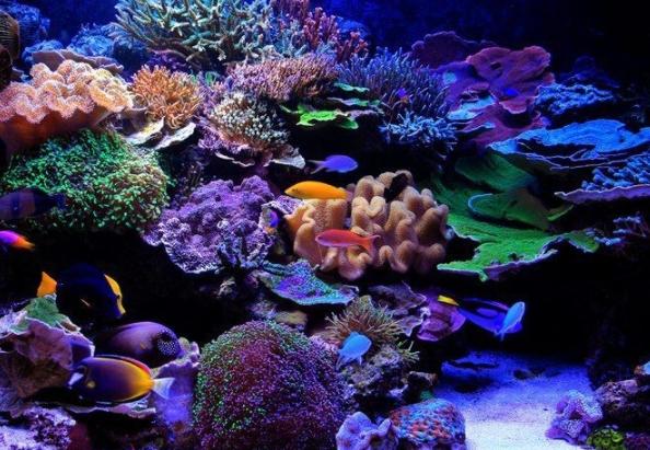 Ikan Hias Air Laut Yang Di Pelihara Dalam Aquarium part 2