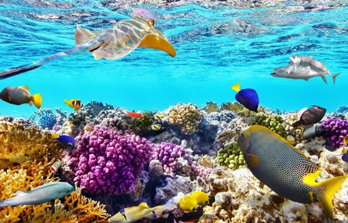 Ikan Hias Air Laut Yang Di Pelihara Dalam Aquarium