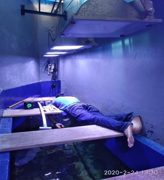 Perawatan Aquarium Air Laut Fish Only - Membersihkan Kaca Aquarium