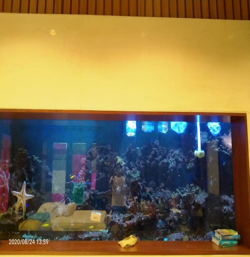 Perawatan Aquarium Air Laut Fish Only - Penambahan Ikan