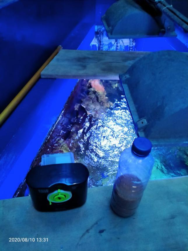 Perawatan Aquarium Air Laut Fish Only - Pengaturan Food Timer