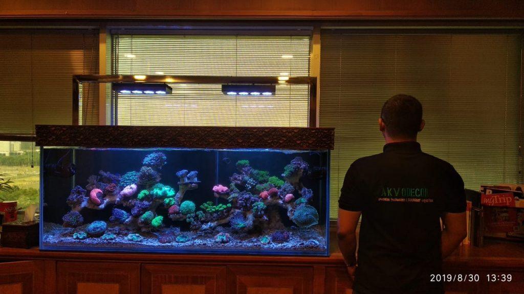 Perawatan Aquarium Air Laut Kementerian Pariwisata