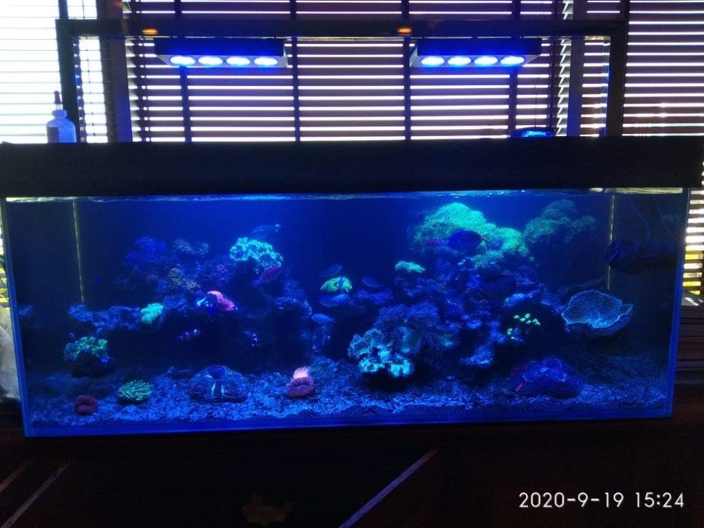Perawatan Aquarium Air Laut Kementerian Pariwisata - sistem pencahayaan aquarium
