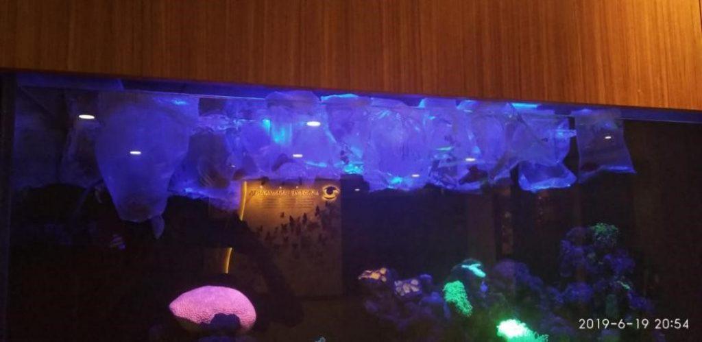 Perawatan Aquarium Laut RS JEC Kedoya - Masuk Ikan