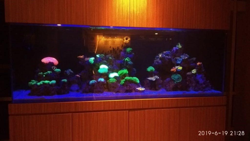 Perawatan Aquarium Laut RS JEC Kedoya - Masuk Koral
