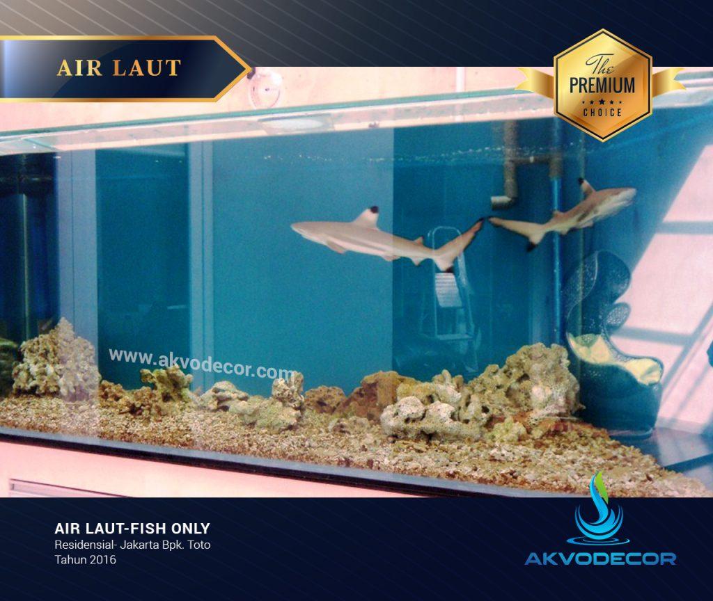 Ikan Hiu, Mengenal Sang Raja Penguasa Lautan Biru