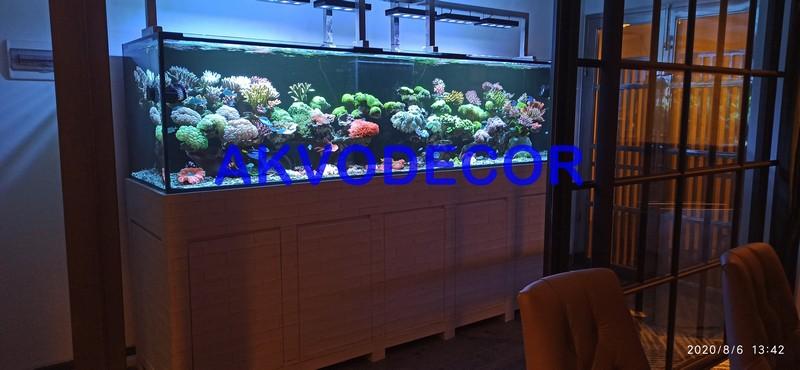 Interior Aquarium Laut - Projek Aquarium Air Laut de Park BSD
