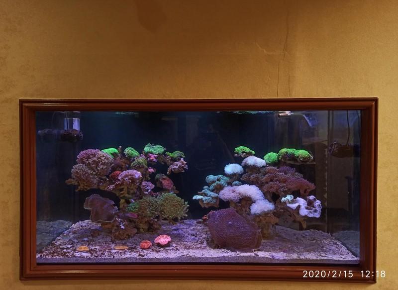 Maintenance Aquarium Air Laut Di PT Media Indra Buana