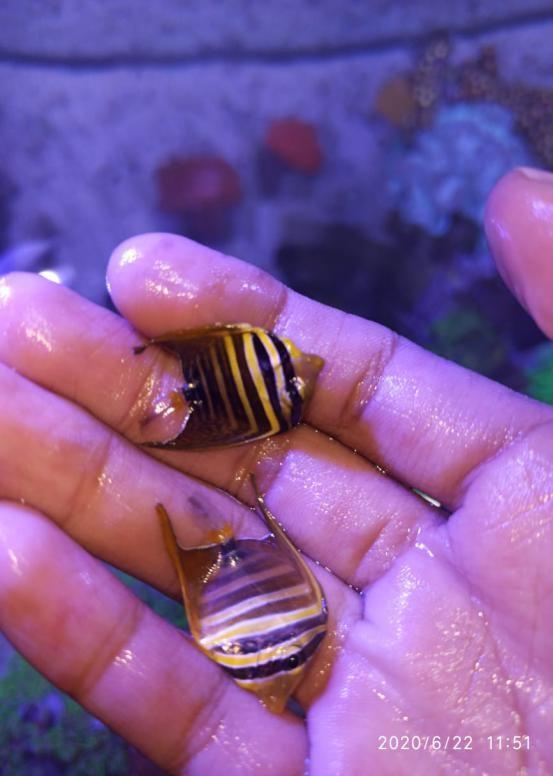 Menambah ikan baru pada aquarium