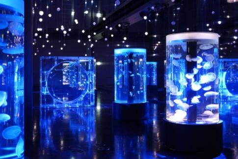 aquarium ubur-ubur