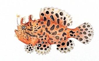 5 Jenis Ikan Hias Frogfish